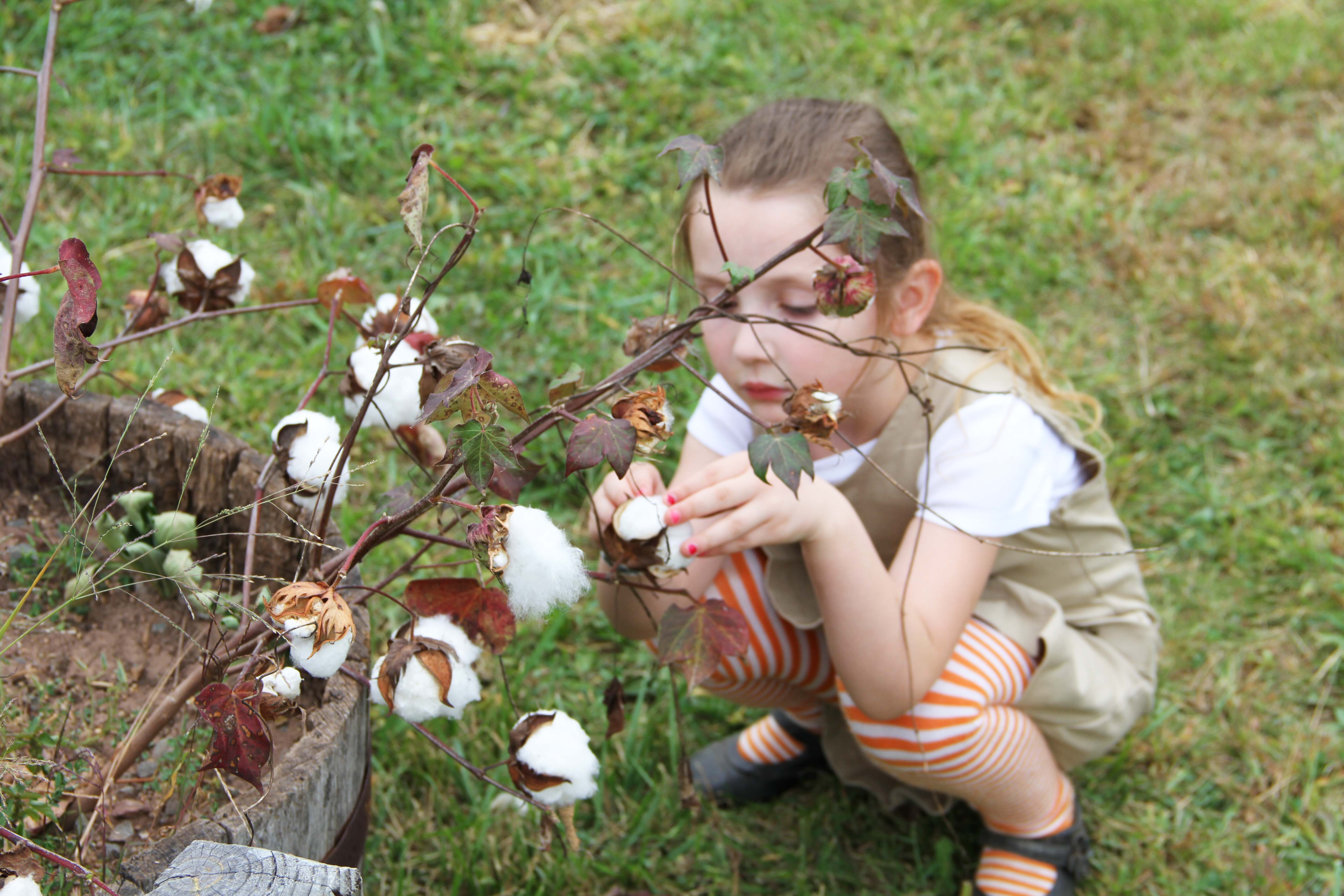 Fluffy with cotton plant