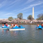 Cherry Blossom Tidal Basin Paddle Boats, Kenwood Neighborhood