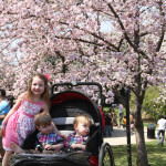 Cherry Blossom Festival Game-Plan 2014