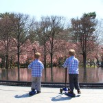 Cherry Blossom Time at Lincoln Memorial and Korean War Memorial